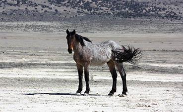 הסוסים