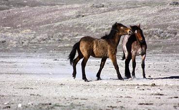 2 סוסים