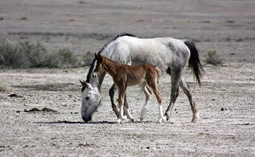 3 סוסים